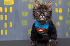 Tabby kitten dressed up as Clark Kent (Batman)
