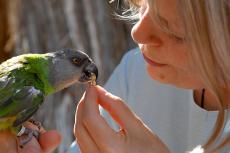 Feeding a morsel to Maxine the parrot