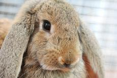 Sick Bunny: Is Your Rabbit Ill?