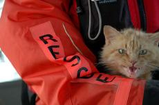 Orange tabby being rescued. Disaster preparedness for pets is essential.
