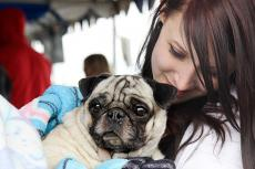 Girl, who is receiving some pet financial aid during a difficult time in her life, with her pug
