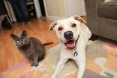 Dog and cat next to one another in a foster home