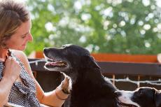 Black senior dog who was in the shelter before being pulled by a breed-specific rescue group and then adopted by woman in photo