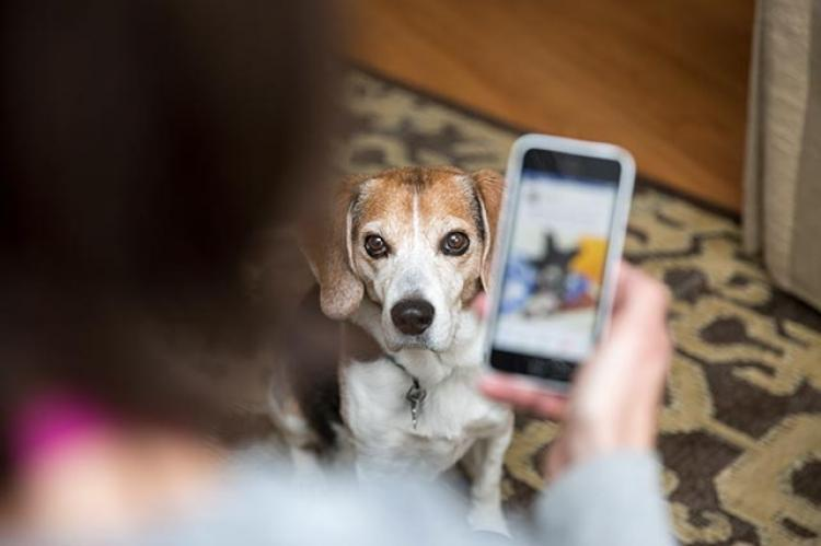 Use Voicify to search Best Friends Animal Society's Resource Center