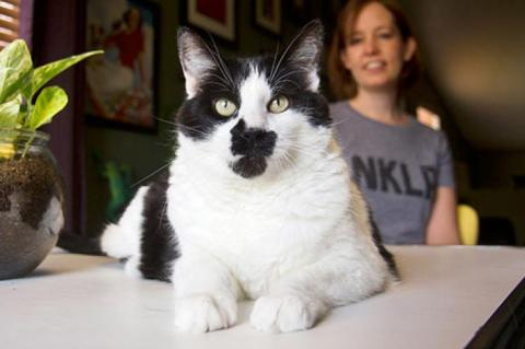Black and white cat sitting on a table in front of a woman wearing an NKLA T-shirt