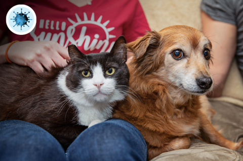 Protect your pets during the Covid19 outbreak
