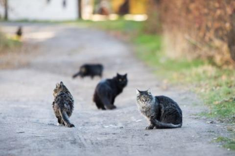 Colony of multiple community cats